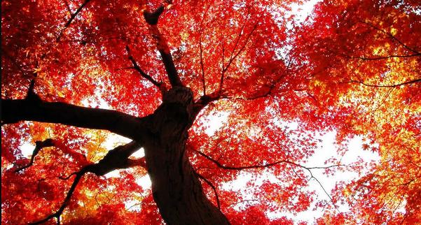 autumn worm view