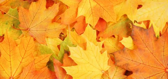 autumn gallery header