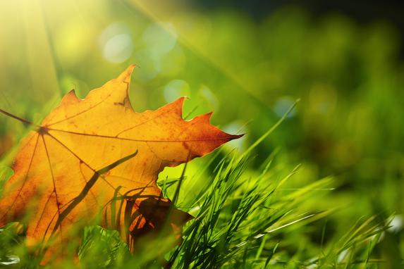 leaf on floor