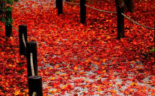 Autumn Coats Wish List