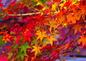 autumn-nights-in
