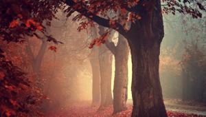 autumn-nights-in1