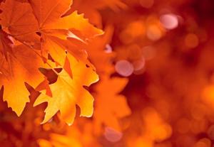 autumn-nights-in2